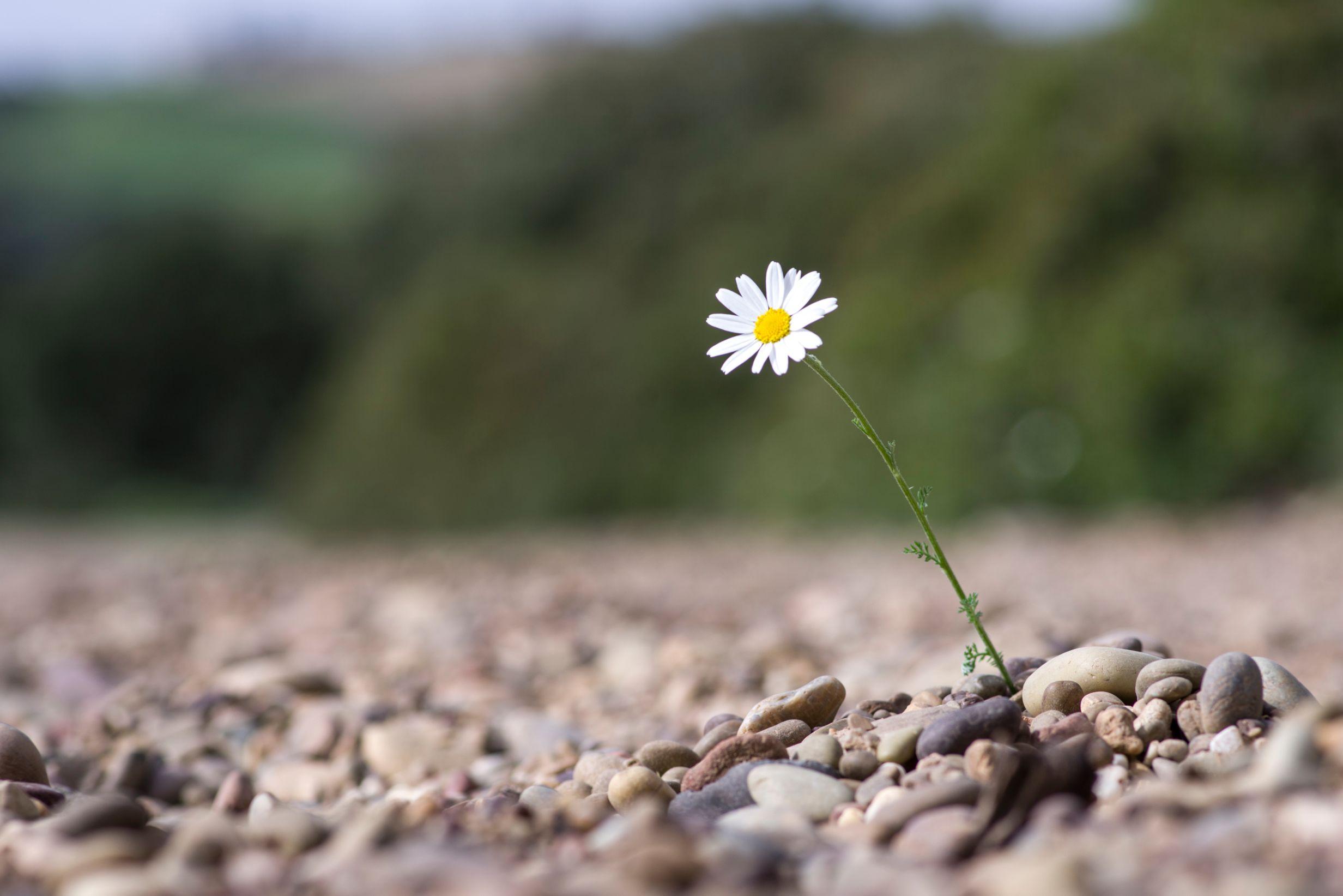 Reiki e resilienza